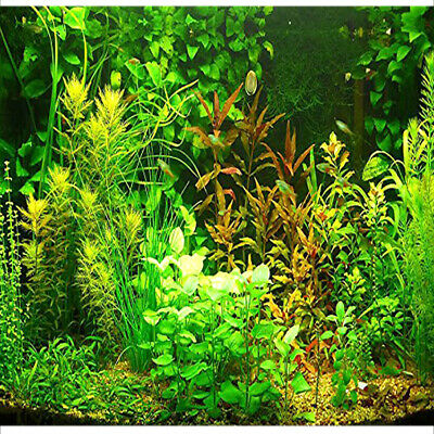 Aquarium Grass Seeds Water Aquatic Plant Seeds (Mix Included 15 Kinds)1000 Seeds • 3.61£