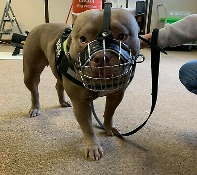 £23 • Buy Strong Metal Wire Basket Dog Muzzle  For American Bully