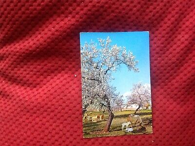 Vintage Blossoming Almond Trees Mallorca Spain Postcard L2 • 0.99£