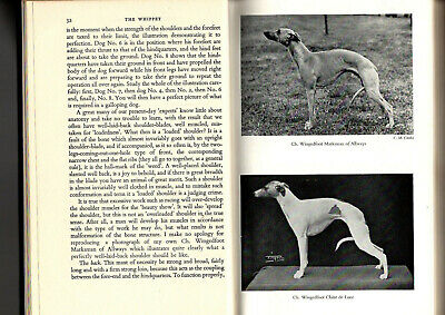The Whippet By C H Douglas Todd Pedigree Dog Breed Hound  • 7.50£