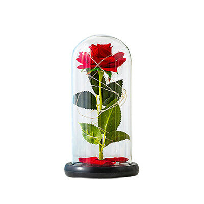 AU24.69 • Buy Little Prince Preserved Eternal Flower Glass Cover, Valentine's Day Rose Gift