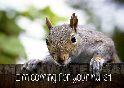 £7.45 • Buy  I'm Coming For Your Nuts  Fun Squirrel Sign/Poster. Professionally Printed