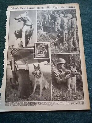 £2 • Buy Zg1 Ephemera Ww2 Picture Using Dogs In Wartime