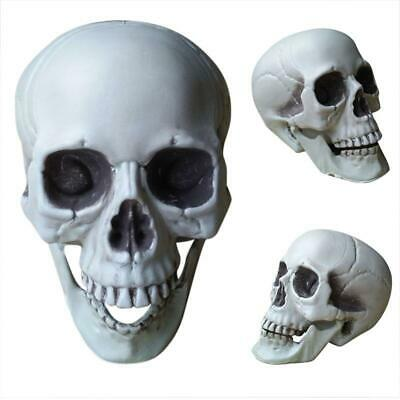 $ CDN11.58 • Buy Creepy Halloween Party Skeleton Display Scary Horror House Lawn Props Skull