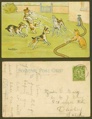 £22.99 • Buy LOUIS WAIN Scratching Up Luck Cat Dogs Puppies Play Water Hose 1912 Old Postcard