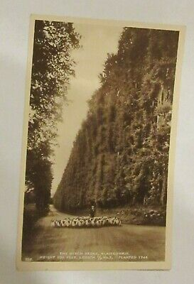£7.99 • Buy The Beech Hedge, Blairgowrie. J.B. White 705. Real Photograph Postcard.