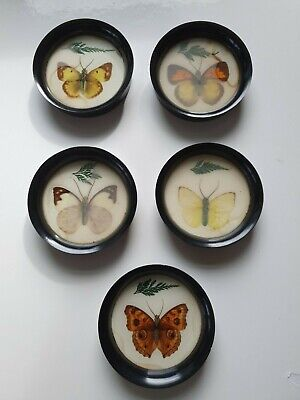 £9.99 • Buy Vintage Mid Century Taxidermy Butterfly Bakelite Coasters Pictures X5