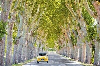 TOM MACKIE PHOTOGRAPHY POSTER ~ 2CV TREE LINED ROAD 24x36 Trees Travel 0485 • 6.17£