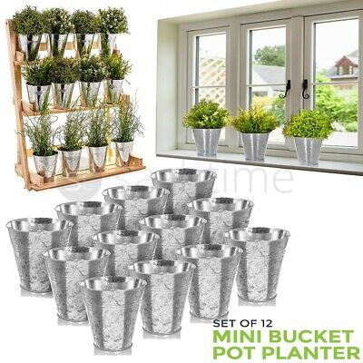 Set Of 12 Mini Bucket Pot Planter Galvanised Iron Flower Herb Planters Garden  • 12.95£