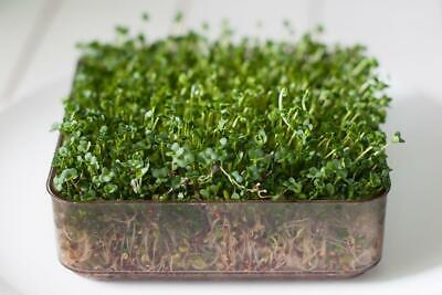 £1.79 • Buy Organic Sprouting / Micro Green Seeds - Broccoli Calabrese - 40 Gram