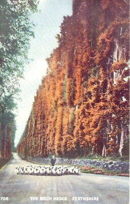£3.25 • Buy Scotland: The Beech Hedge, Perthshire - Posted 1953