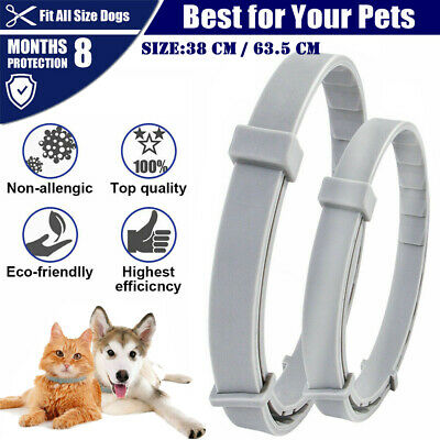 Adjustable Anti Flea And Tick Neck Collar For Dog Cat Pet 8 Months Protection UK • 4.79£