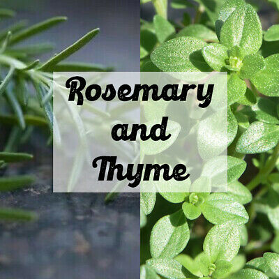 Rosemary And Thyme Herb Seeds | Natural Herb Seed Variety Pack • 3.99£
