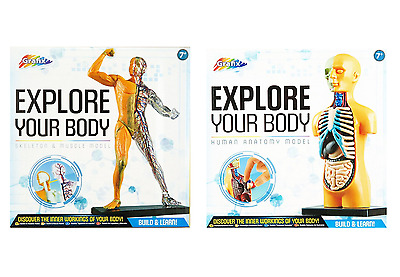 Explore Your Body Human Anatomy Model Kit Build & Learn Skeleton & Muscle Rms • 10.95£