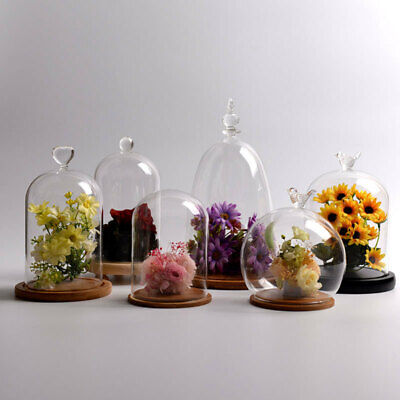 £15.54 • Buy Large Clear Glass Display Dome Bell Jar Cloche With Wooden Base DIY Decoration