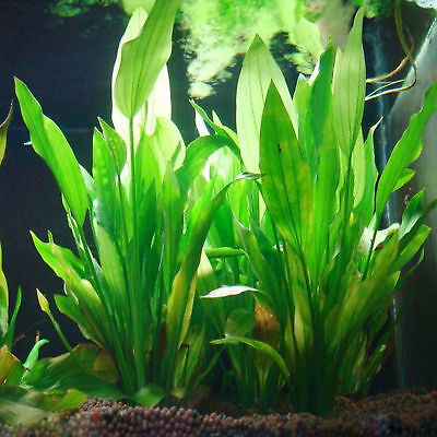 5Pcs Water Grass Green Plant For Fish Tank Artificial Plastic Aquatic Plants • 5.99£
