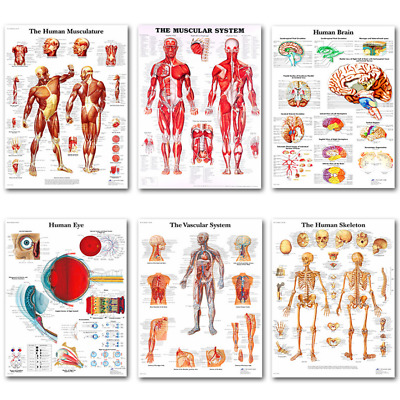 Medical Education Picture Skeletal System Human Body Brain Anatomy Silk Poster • 4.74£