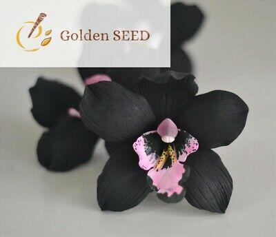 AU3.83 • Buy 100 Seeds Black Orchid Rare Exotic Mysterious Orchid Home Garden Bonsai Planting