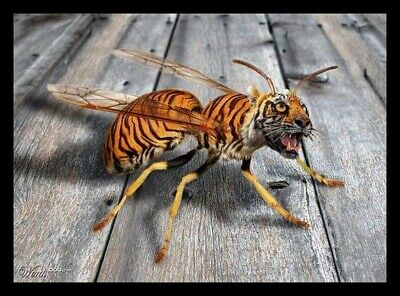 £12 • Buy Men's Ladies T SHIRT Cool Art Tiger Wasp Crazy Insect Scary String Bite