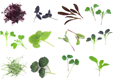 £2.79 • Buy Microgreen Seeds - Vegetable - Herb - Spice, Sprouting - 30 Verities - 1st Class