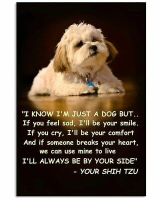 £15.08 • Buy Shih Tzu I Know I'm Just A Dog But I'll Always Be By Your Side Poster ,no Framed