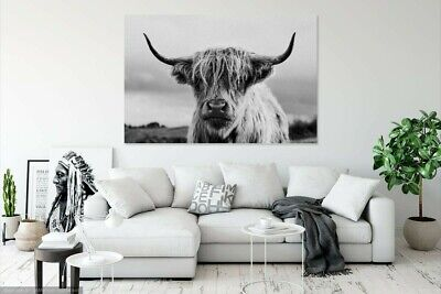 £20.99 • Buy Black And White Scottish Highland Cow Wall Art Large Framed Canvas Picture
