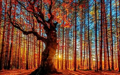 £20.99 • Buy Sunset Forest Trees Nature Autumn Nature Wall Art Large Framed Canvas Picture
