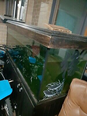 AU350 • Buy Fish Tank 6×6×2 Comes With Ornaments And Fluval Canister Filter