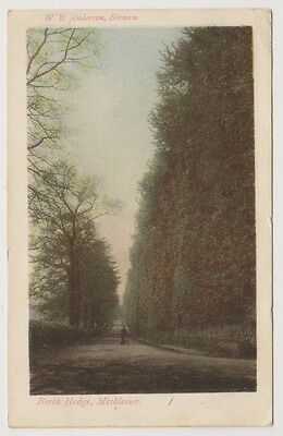 £1.50 • Buy Perthshire Postcard - Beech Hedge, Meikleour (A338)