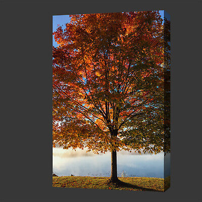 £19.99 • Buy Beautiful Autumn Tree Contemporary Modern Box Canvas Print Wall Art Picture