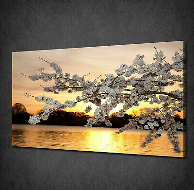 £44.99 • Buy Beautiful Gold Sunset Cherry Blossom Box Canvas Print Wall Art Picture