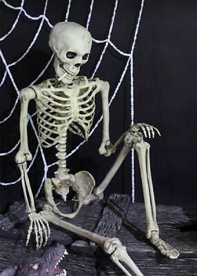 $134.99 • Buy 5-Ft High Quality Realistic Life-Sized Jointed Hanging Skeleton Halloween Decor