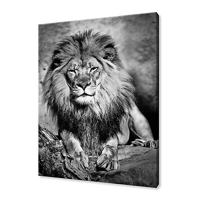 £19.99 • Buy Beautiful African Male Lion Black White Animal Box Canvas Print Wall Art Picture