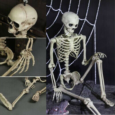 $6.89 • Buy Halloween Poseable Life Size Skeleton Party Prop Decor Human Anatomy Model US