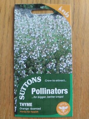 Suttons 100 Seeds Thyme Scented Orange Herb Perennial Plant Aromatic • 1.89£