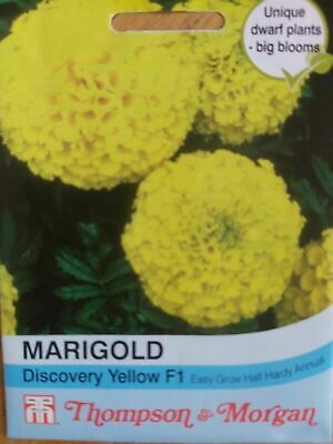 Thompson & Morgan - Marigold Discovery Yellow F1 Hybrid (African) - 20 Seed • 2.95£