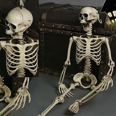 $ CDN28.21 • Buy Terror Full Size Human Skull Skeleton Anatomical DD Halloween Party Decoration