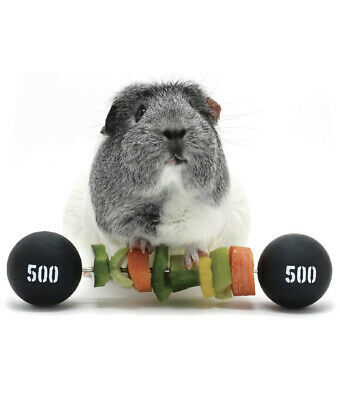 £11.99 • Buy HAYPIGS Guinea Pig Toys And Accessories - Circus Themed PIGGY WEIGHTLIFTER...