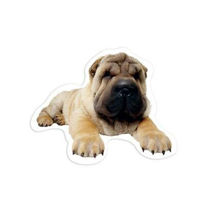$1.99 • Buy Gift Sticker : Sharpei Sorry I Can't Have Plans Dog Pet Funny Cute