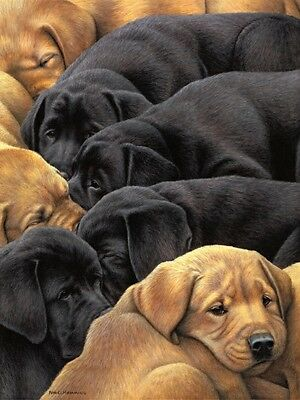 £79.50 • Buy Nigel Hemming FLAT PACK - LARGE Labradors Labs Puppy Puppies Gun Dogs Cute Dogs