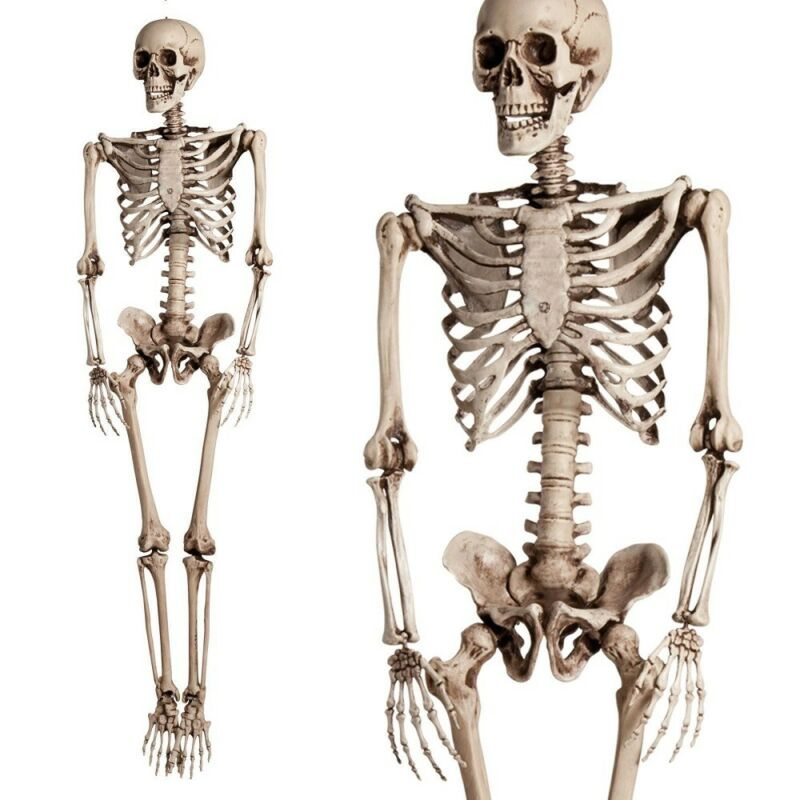 $49.98 • Buy 5.6ft Halloween Poseable Human Skeleton Full Life Size Props Party Decoration