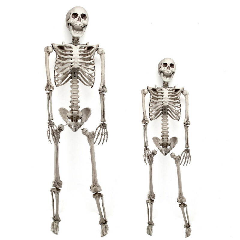 $17.96 • Buy 3/5.6ft  Halloween Skull Skeleton Poseable Human Full Life Size Prop Party Decor