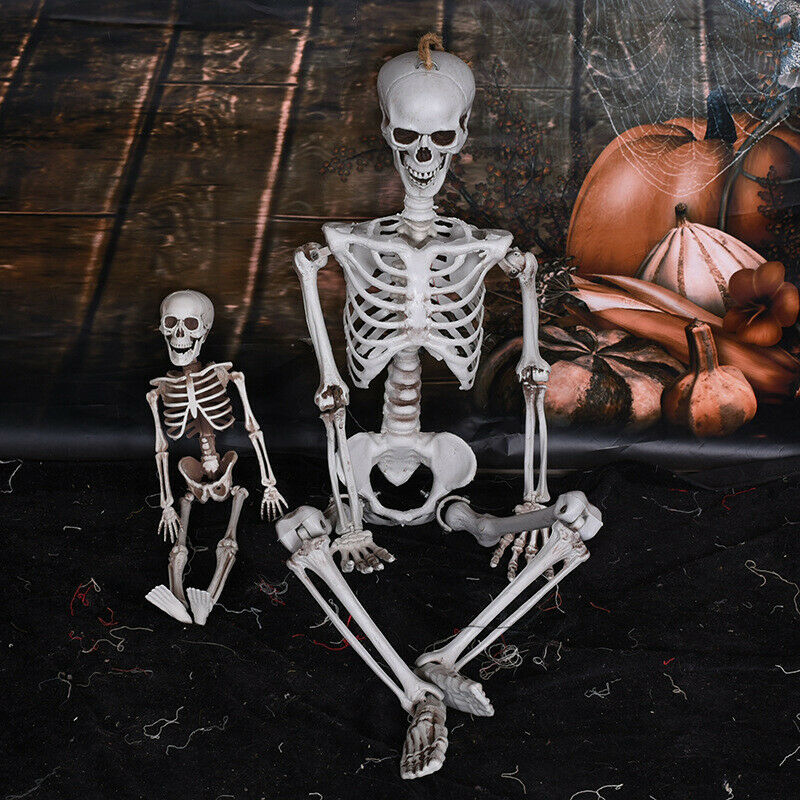 $6.11 • Buy 15/40cm Poseable Full Life Size Human Skeleton Halloween Decoration Party Pr N№—