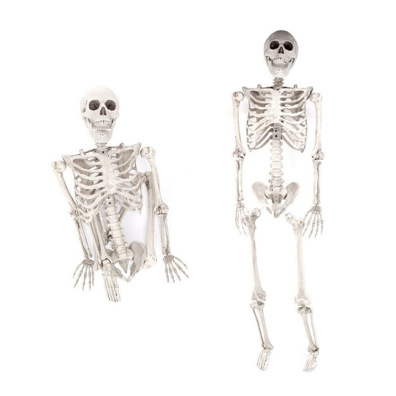 $45.50 • Buy Halloween Prop 5.6Ft. Posable Human Full Body Skeleton Life Size Party Decor