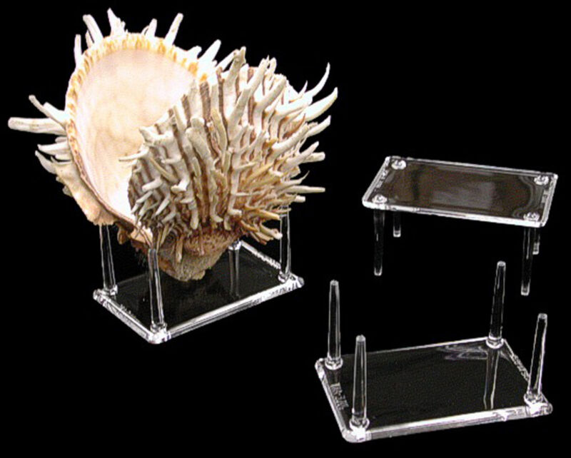 $5.59 • Buy 4 Prong Display Table Stand 2 X 3  For Seashells Clear Acrylic Decor