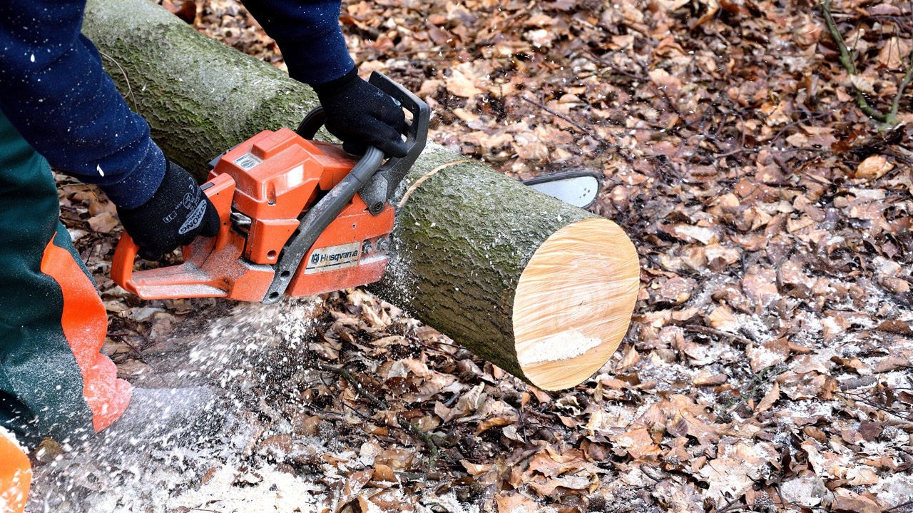 Best Chainsaw for 2021